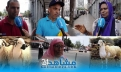 """بالفيديو.. المغاربة وعيد الأضحى: """"كندبحو الحولي ونتصورو معاه"""""""