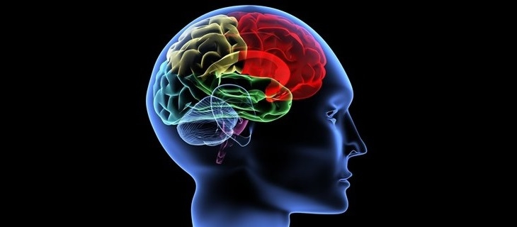 40 دقيقة للحاسوب ليحلل ثانية من مخ الانسان