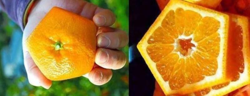 برتقال خماسي الشكل في اليابان