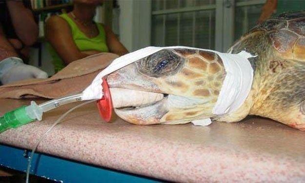 وفاة سلحفاة الملك فاروق.. ثاني أقدم حيوان على سطح الأرض عن عمر 270 سنة