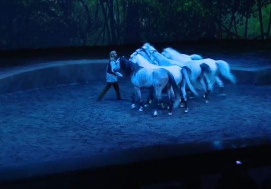 الخيول ترقص مع الضوء والماء