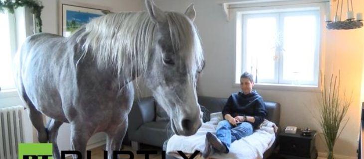 الحصان العربي يعيش في منزل صاحبته