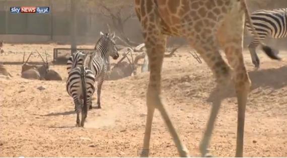 حديقة الحيوان بمدينة العين الإماراتية