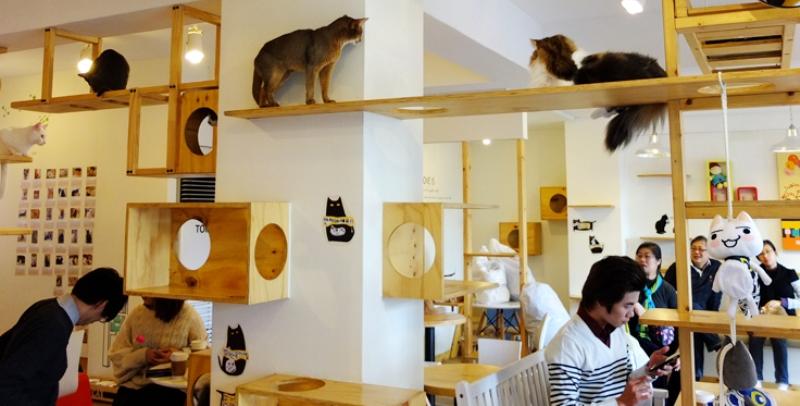 مقهى للقطط في لندن