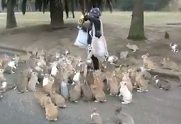 هجوم أرانب على سيدة بسبب الجوع