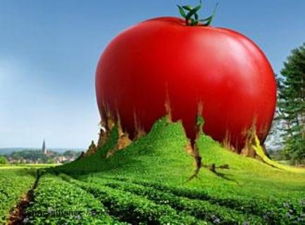 ماذا تعرف عن الخضر المعدلة وراثيا
