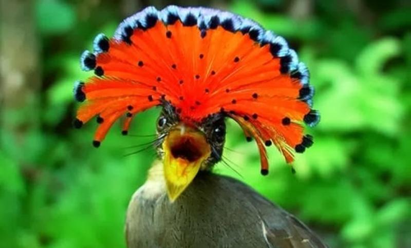 الطائر الملك