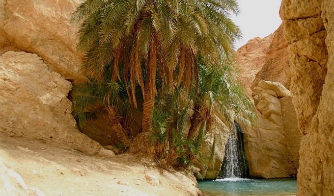 تونس تحتفل بالدورة 28 لمهرجان الواحات الجبلية بتمغزة