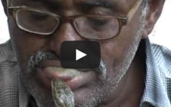 بالفيديو أسرة يمنية تعيش مع الثعابين
