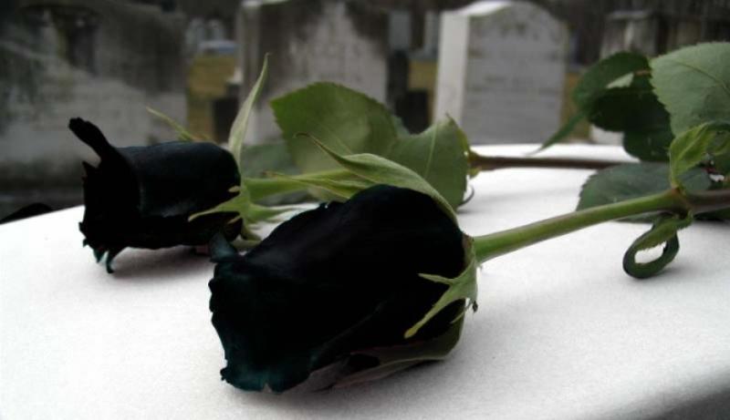 الورود السوداء هل هي حقيقة؟ إذا كانت كذلك فأين توجد؟