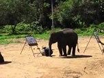 الفيل فنان تشكيلي ماهر