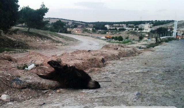 إيجاد رؤوس وأحشاء حمير بجنبات طريق الجلفة الجزائرية