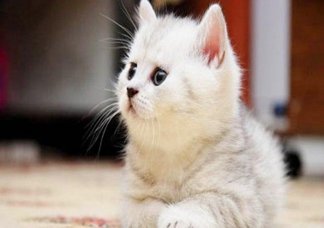 تكريم قطة أنقذت طفلا من هجوم كلب عدواني