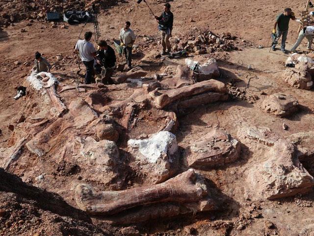 اكتشاف أكبر ديناصور في التاريخ بالأرجنتين