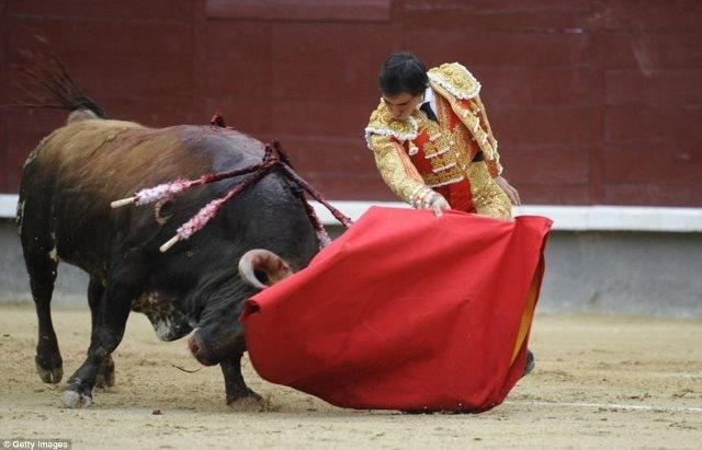 إلغاء مهرجان مصارعة الثيران بعد سقوط عدد من المصارعين