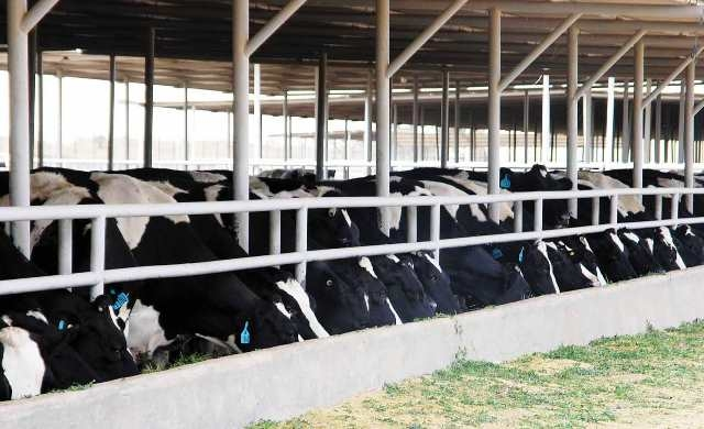 الجزائر تساهم في تطوير انتاجيتها من الحليب