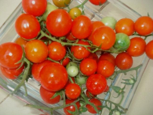الطماطم الكرزية المغربية مطابقة للمعايير