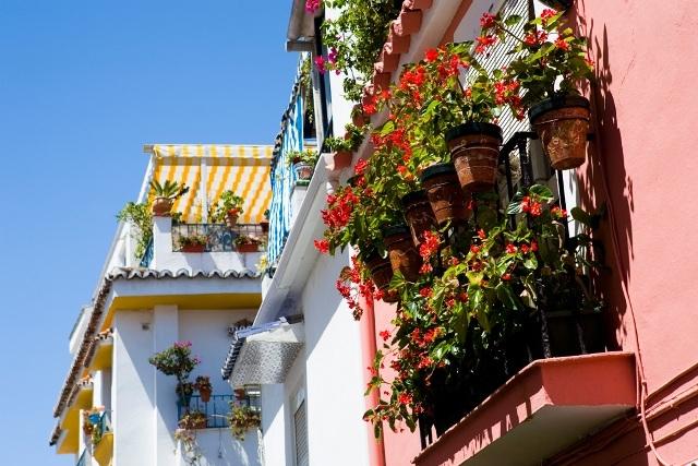 الجزائريات يفضلن زهرة الأقحوان ونبات