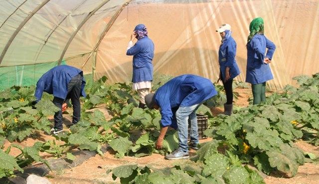 المغرب رئيسا لاتحاد المهندسين الزراعيين العرب