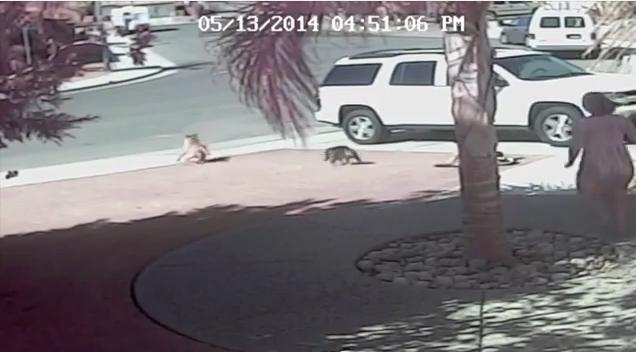 مذهل..قطة تتصدى لكلب هاجم طفلا صغيرا