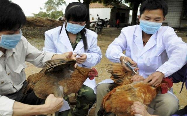 الصين تسجل 3 إصابات بشرية بأنفلونزا الطيور