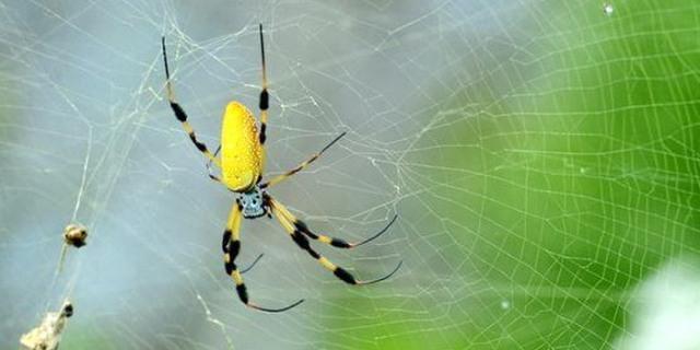 العناكب تختار وظائفها وفقا لطبيعتها الفردية