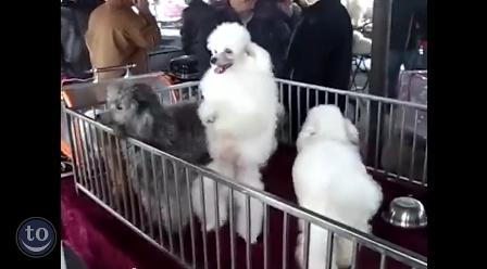 حيوانات ترقص على أنغام أغنية Push It