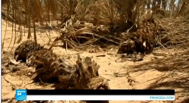 الجفاف يقضي على واحة تانزيضا بالمغرب