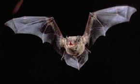 الخفافيش لتطوير جيل جديد من الطائرات بدون طيار