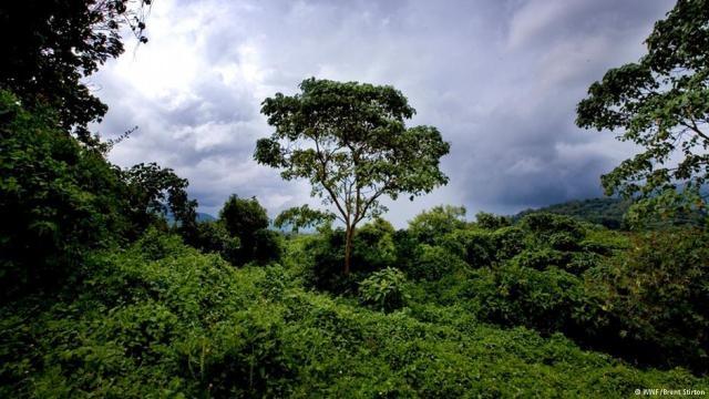 علماء يكشفون أسباب شهيق الأشجار عند العطش