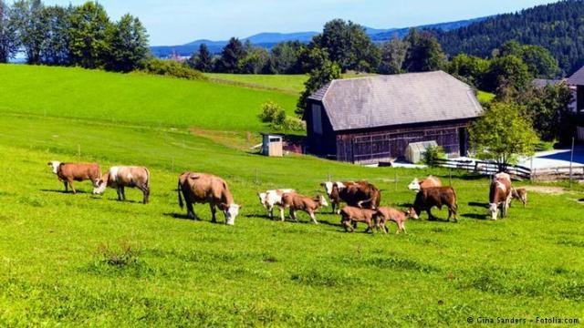 أبقار نمساوية تقتل سائحة ألمانية في جبال الألب