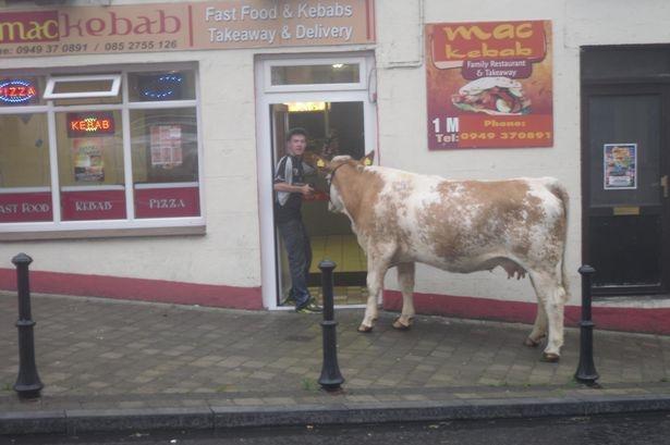 أيرلندي يأخذ بقرته في جولة في المدينة ويتوقف عند مطعم كباب
