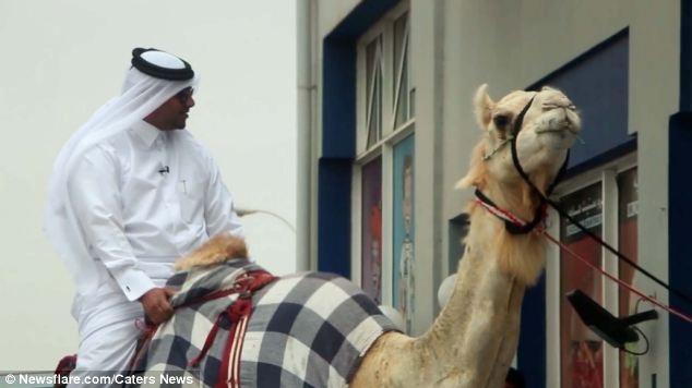 رحالة يمني يسعى لدخول كتاب غينيس على ظهر جمل