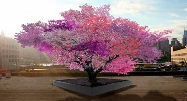 شجرة تنتج 40 نوعا من الفاكهة