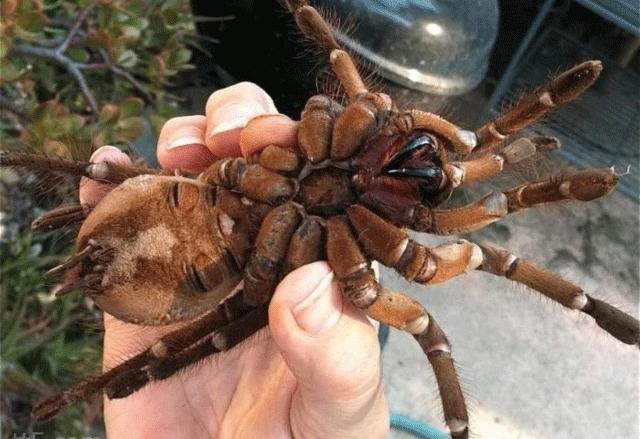عنكبوت يتسبب في حرق منزل وخسائر كبير