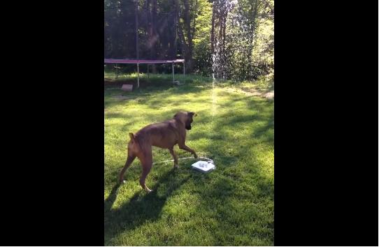 كلب يبحث عن الانتعاش..فيحصل عليه بطريقة ذكية