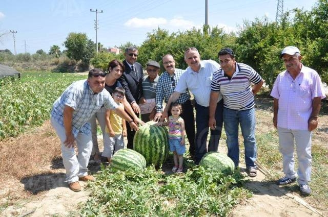 أكبر بطيخة في تركيا تزن 58 كيلوغرام