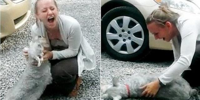 إغماءة كلب رأى صاحبته بعد فراق عامين