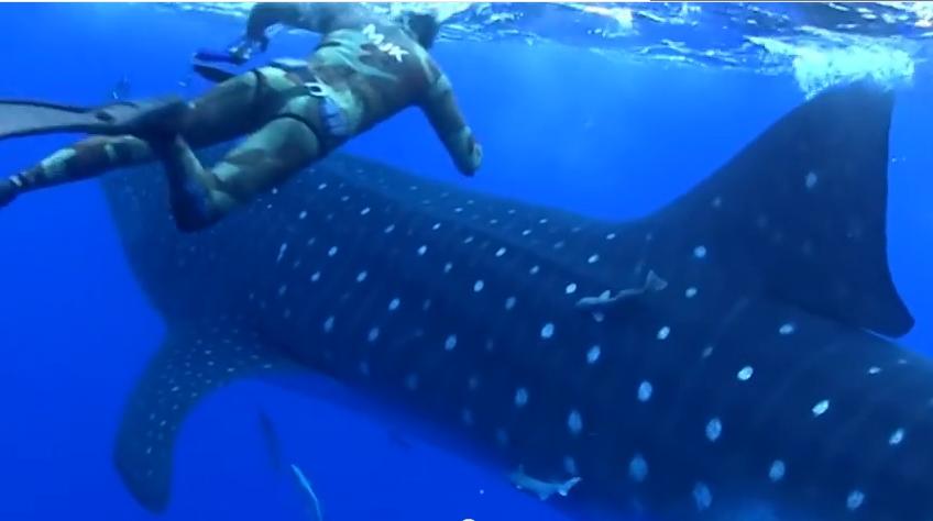 قرش ضخم يفاجئ مصورا تحت الماء