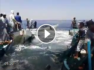 شواطئ غزة وخيراتها