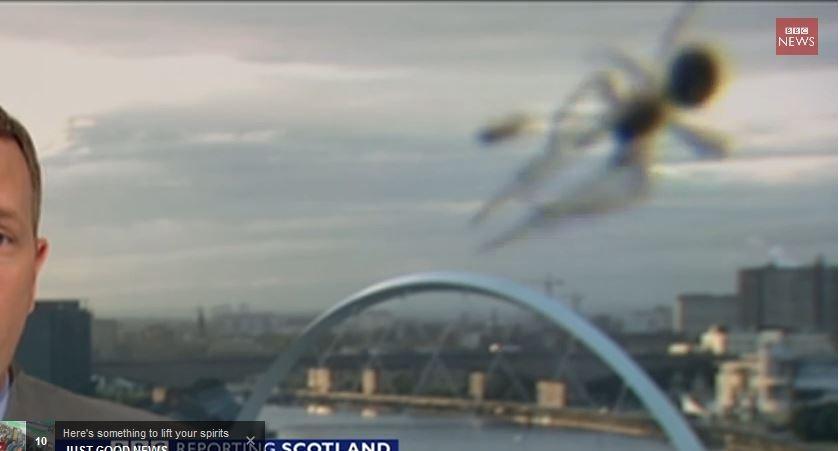 """عنكبوت يصطاد فريسته على كاميرا نشرة أخبار """"بي بي سي"""""""