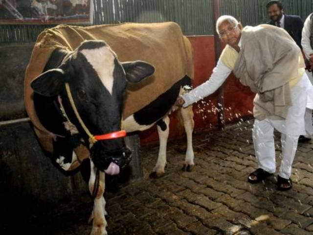 محكمة هندية تأمر بتحليل الـDNA لبقرة !