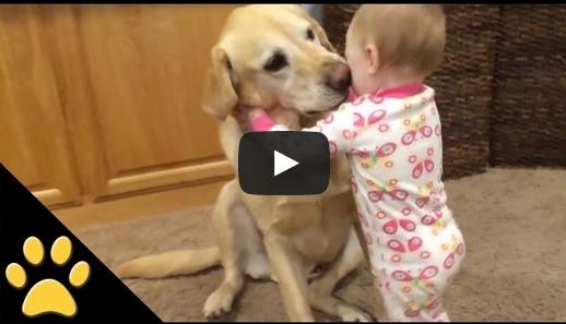 علاقات لطيفة بين الأطفال والكلاب
