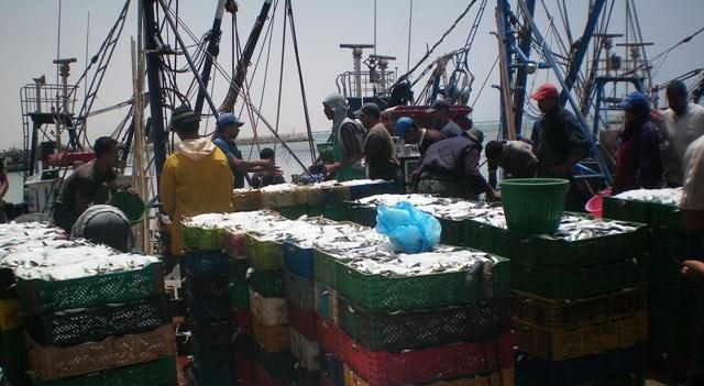 أخنوش: المغرب رائد في إنتاج سمك السردين على المستوى العالمي