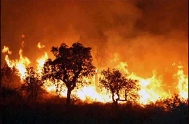 52 حريقا في الجزائر خلال 24 ساعة الأخيرة