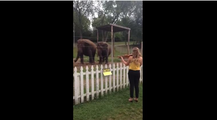 شابة تعزف موسيقية كلاسيكية لفيلة..شاهد ردة فعلها