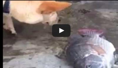 كلب يحاول انقاذ أسماك