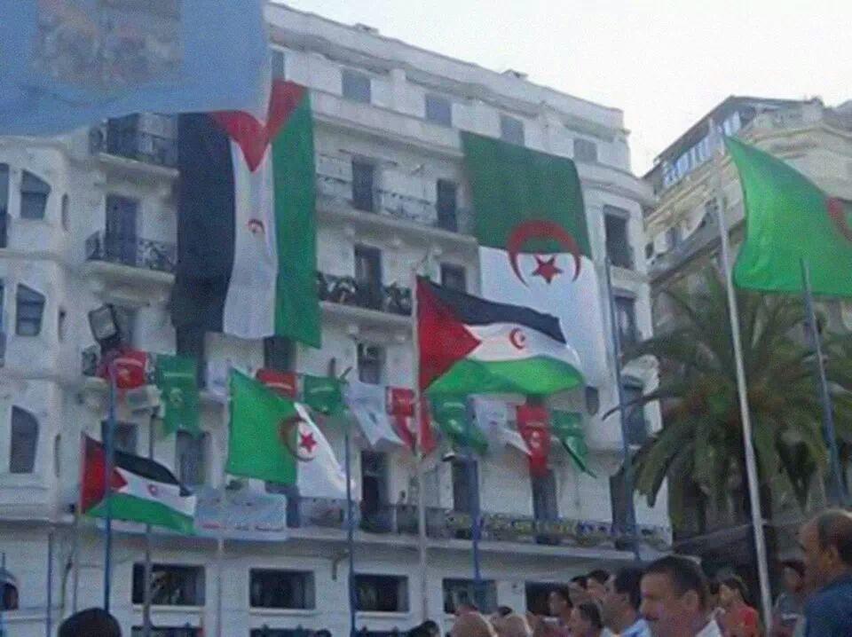 الجزائر تدرب 500 عنصر من البوليساريو على الأسلحة وحرب الشوارع