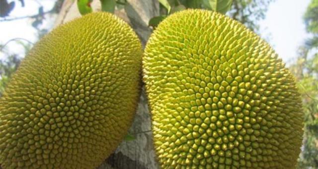 1500 درهم سعر حبة واحد من فاكهة