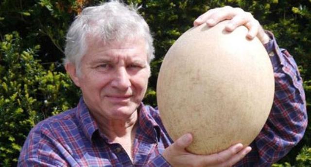 بيع أكبر بيضة في العالم لطائر «الفيل المنقرض»